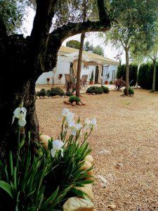 Vista de la casa desde jardín